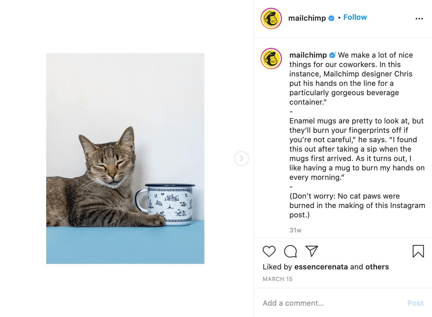 mailchimp funny cat photo on instagram