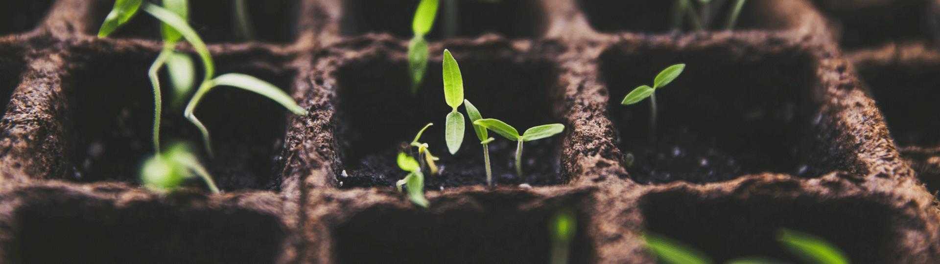 Grow-Instagram